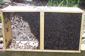 Package of Honeybees waiting to be installed.
